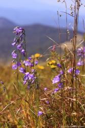 Очаровательные полевые цветочки