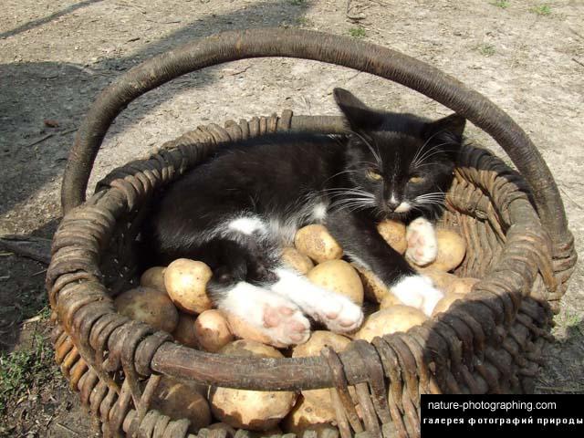 Кот в корзине фото