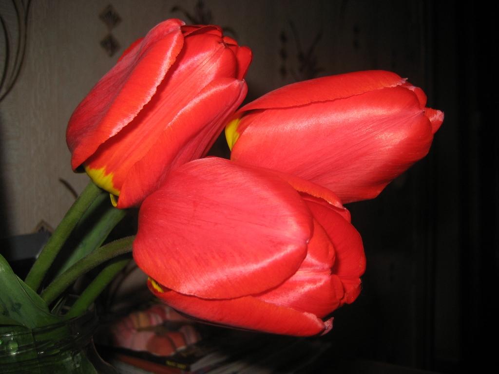 Розы на юге и их окружение тема для общения в вопросах и