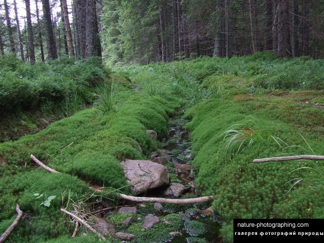 http://nature-photographing.com/d/3678-3/DSCF1565.jpg