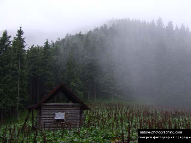 http://nature-photographing.com/d/3682-3/DSCF1650.jpg