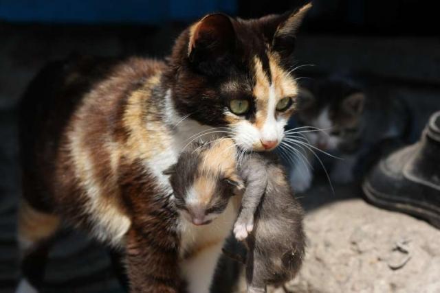мама кошка скачать