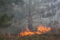 Этого допускать нельзя берегите лес