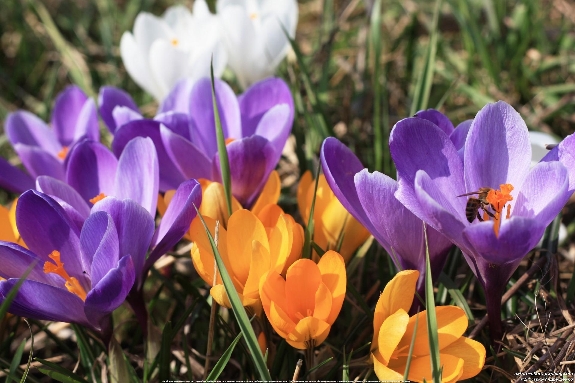 Самая красивая картинки весны на рабочий стол